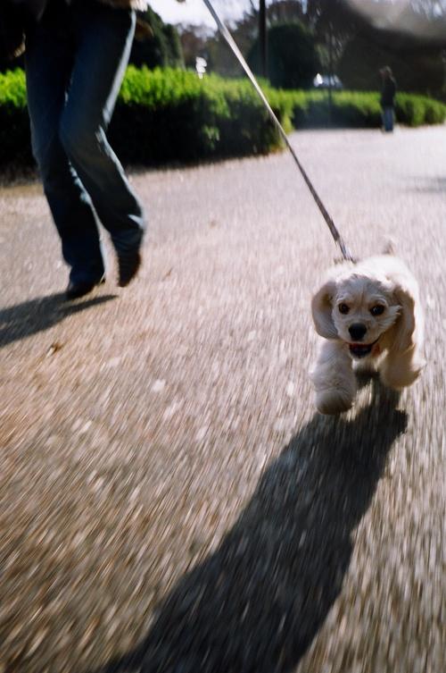 歩く!Capri